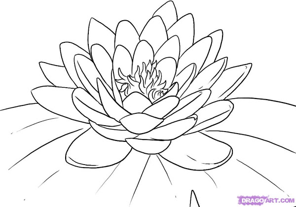 600x420 Water Lily Flower Coloring Page