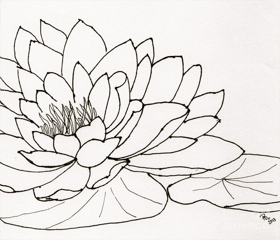 900x771 Water Lily Line Drawing Drawing By Anita Lewis