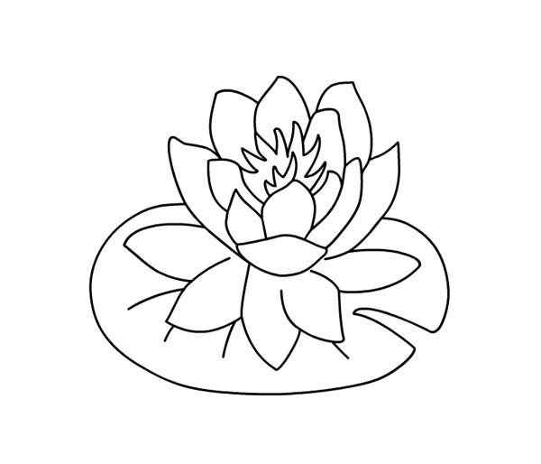 600x514 Water Lily Over Lily Pad Coloring Page Color Luna