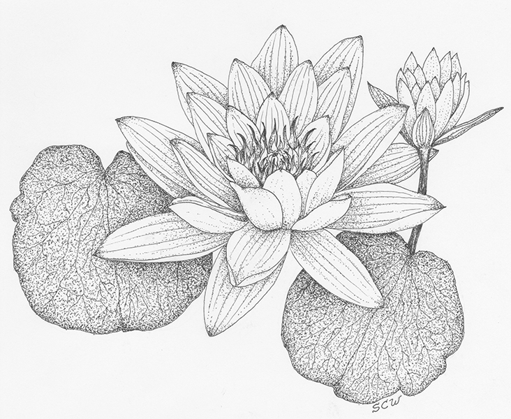 732x600 Water Lily Petal Cutters World Of Sugar Art