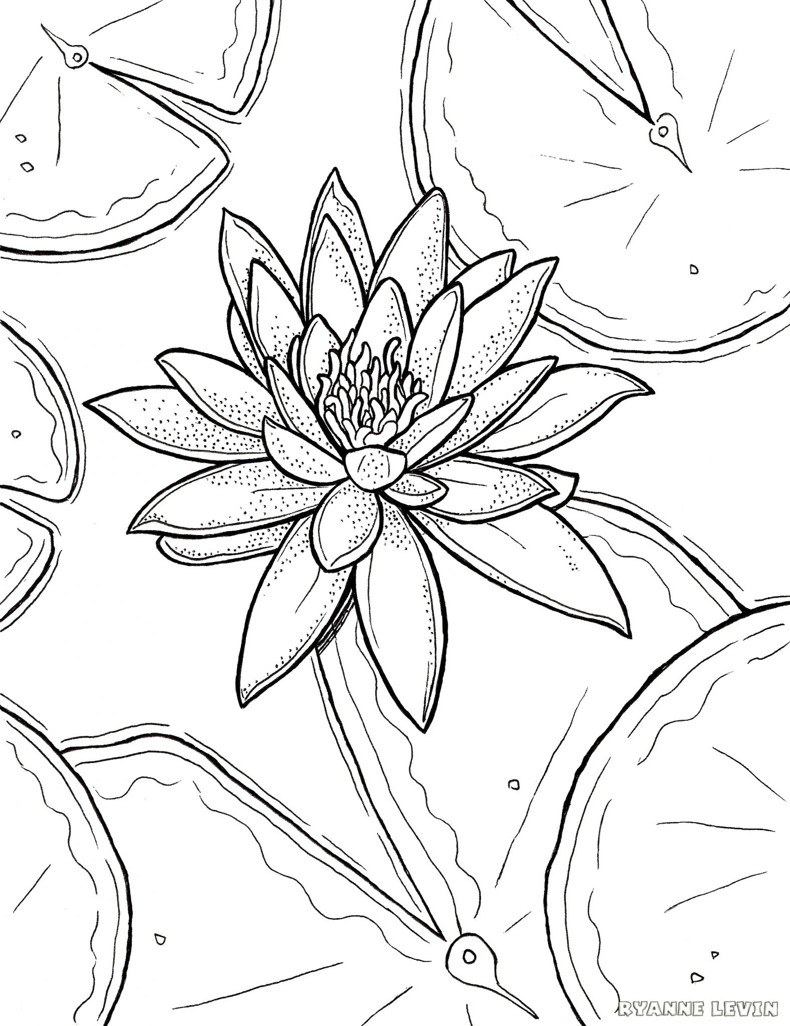 1577x2048 Free Printable Water Lily Coloring Page Download Ryanne Levin
