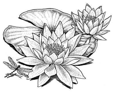 394x326 Water Lily Dragonfly Coloring