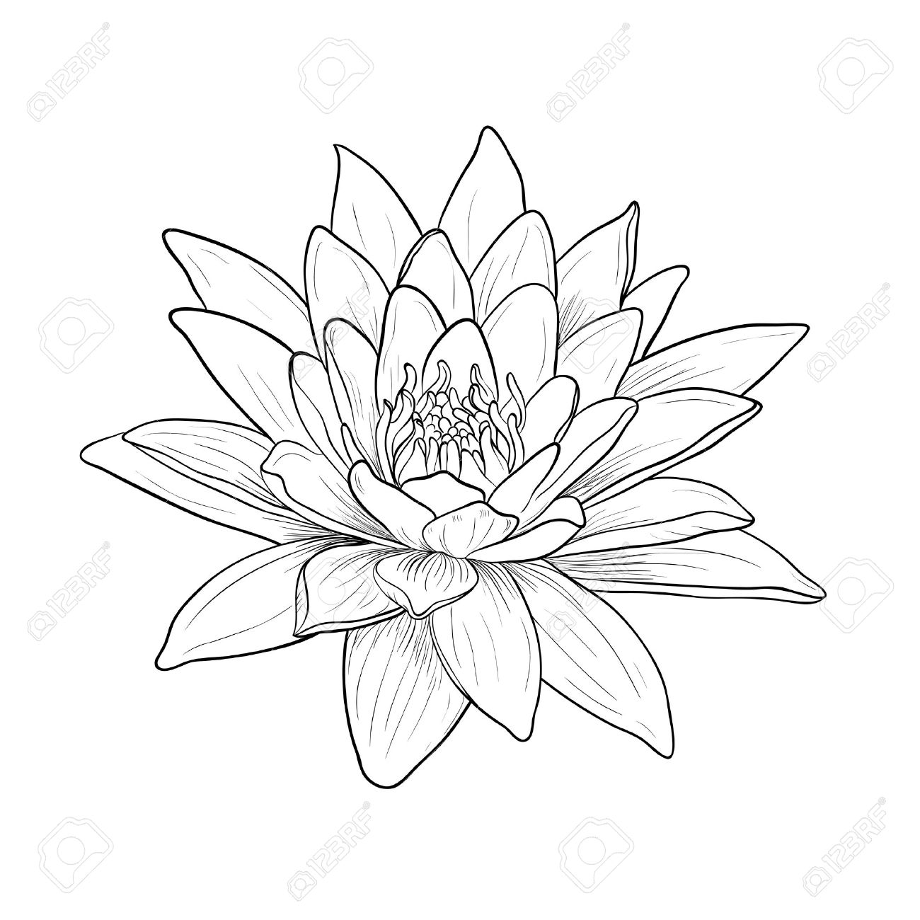 1300x1300 Floral Water Lily. Vector Line Style Royalty Free Cliparts