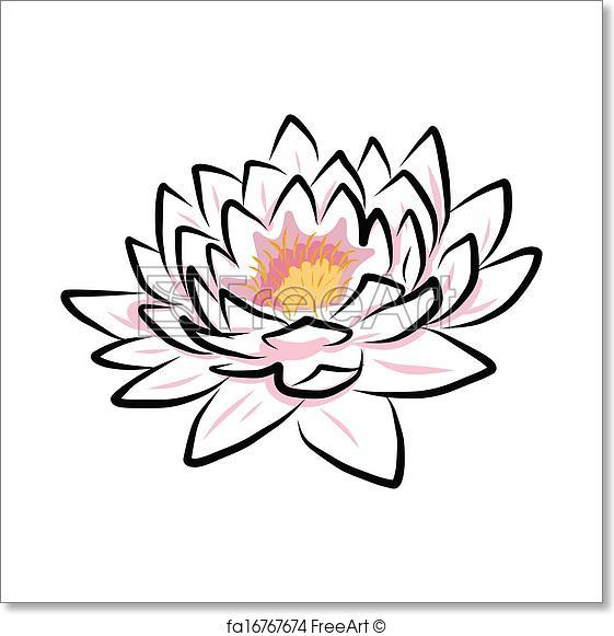 561x581 Free Art Print Of Hand Drawing Water Lily, Lotus, Flower. Hand