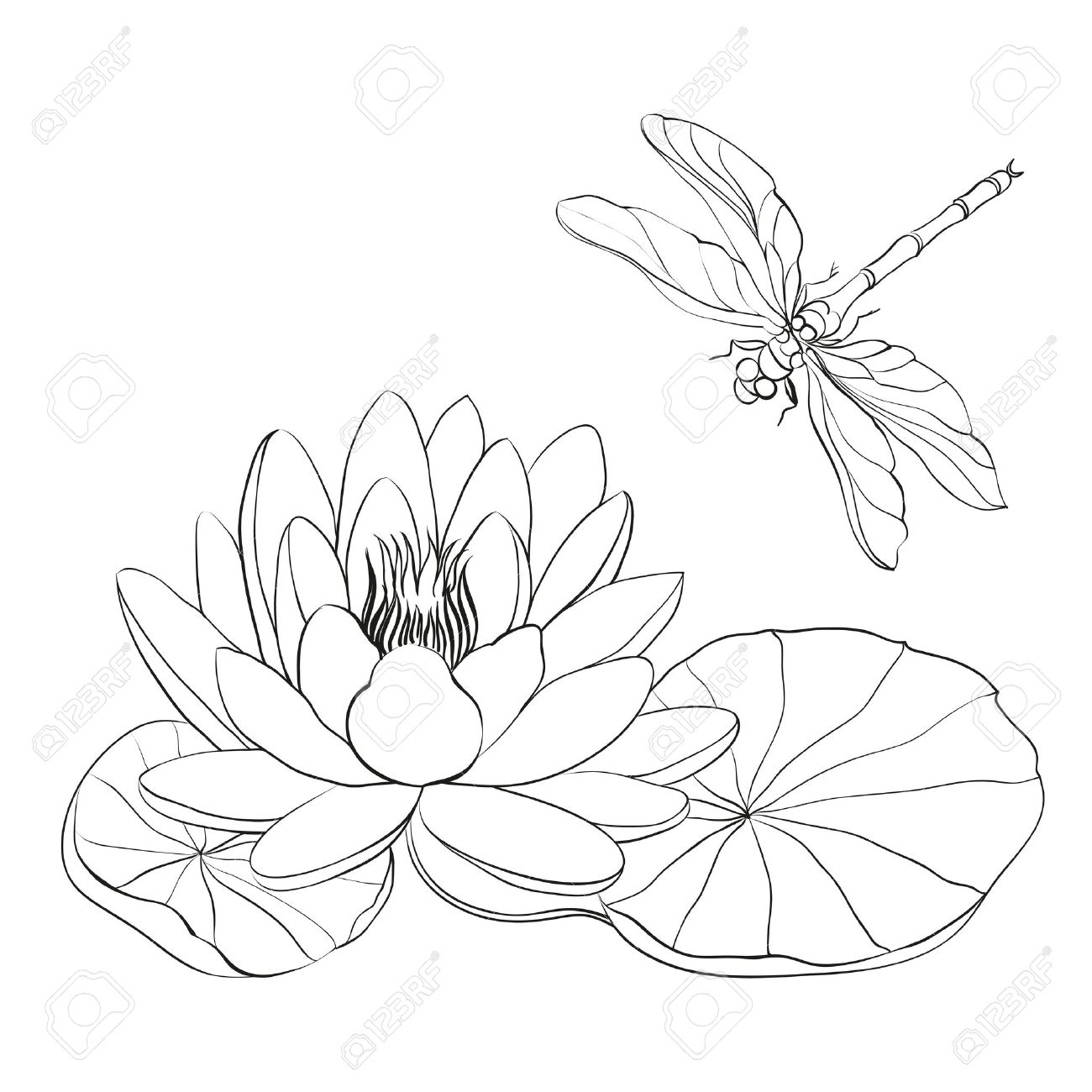 Water lily flower drawing at getdrawings free for personal use 1300x1300 lily cliparts stock vector and royalty free lily illustrations izmirmasajfo
