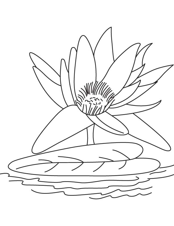 612x792 Big Water Lily Flower Coloring Page Download Free Big Water Lily