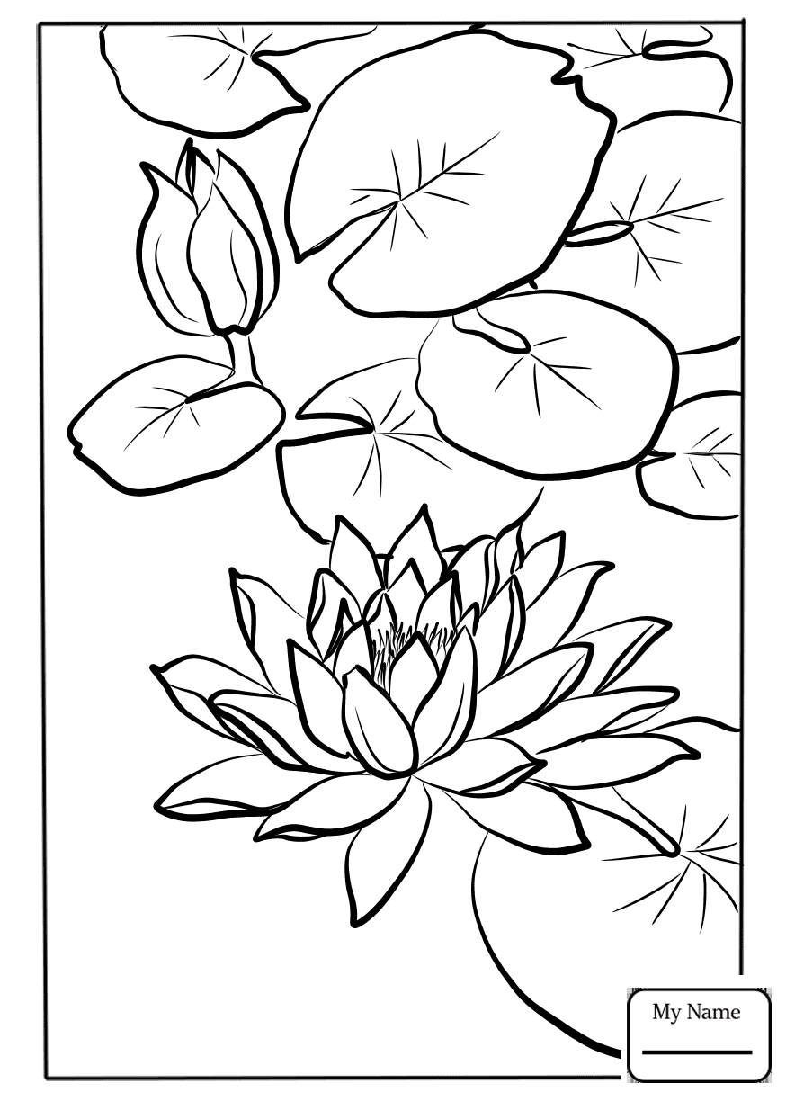 Coloring page of water lily