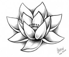 236x195 Simple Water Lily Drawing Water Lily Pencil Drawings Stencils
