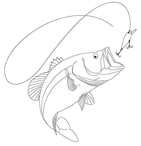 600x623 Drawing Of A Largemouth Bass On Behance