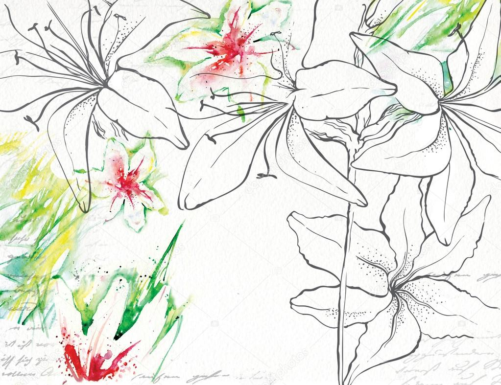 1023x787 Drawing Lily Made With Watercolor And Ink Stock Photo Ola Ola