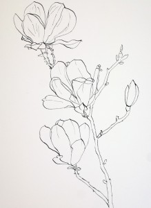 219x300 Drawing Pink Magnolia Flowers