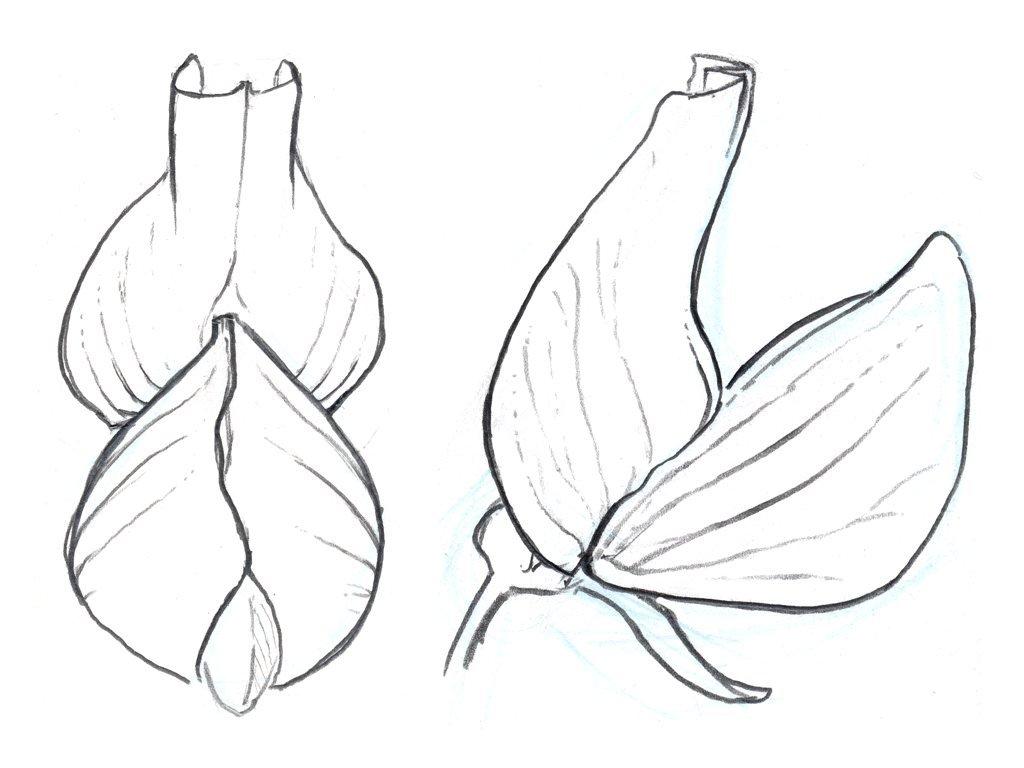 1024x768 Drawing Plants 2.062 001 Tattoo Drawings