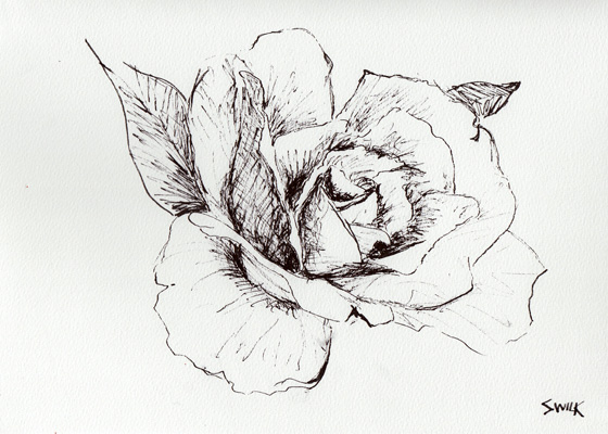 560x400 Rose In Gardens Of Versailles, Pen And Ink Drawing From France