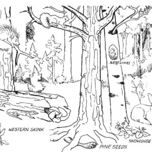 300x300 Forest And Waterfalls Coloring Page Sky