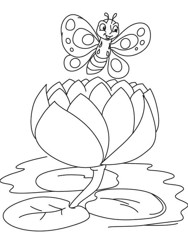 612x792 Lily Coloring Pages Lily Banner Coloring Page Water Lily Pad