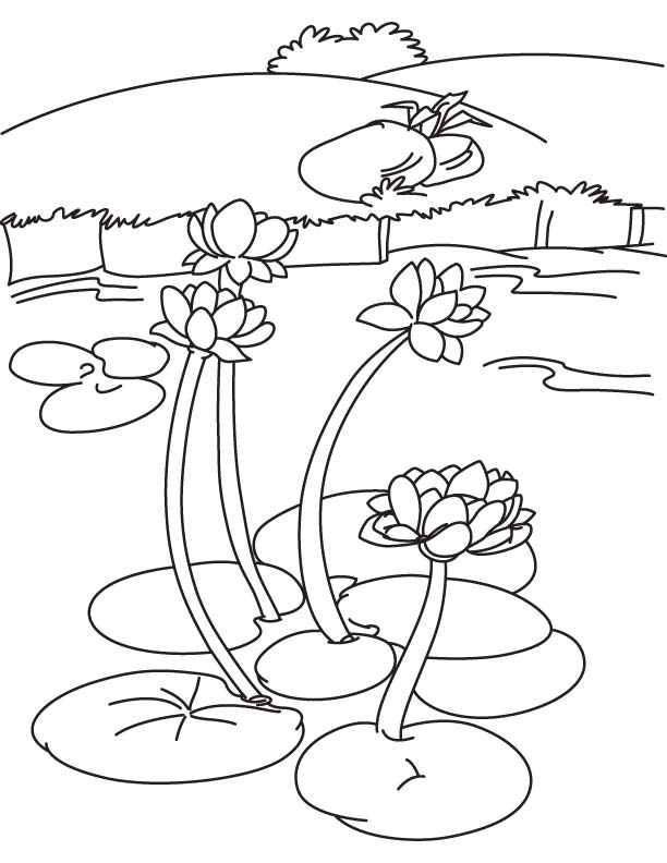 612x792 Water Lily Lake Coloring Page Download Free Water Lily