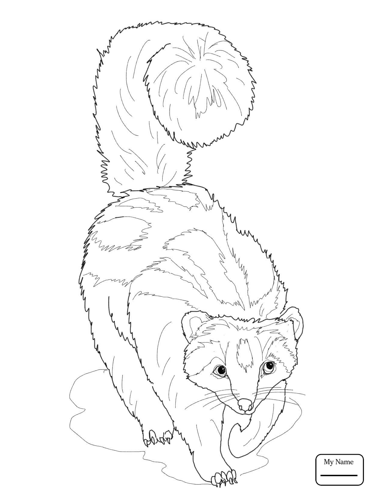 1224x1632 Weasel Mustela