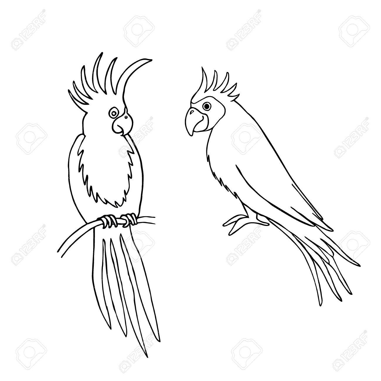 1300x1300 Vector Illustration Of Parrot Outline Based On Hand Draw Sketch