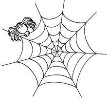 220x220 Spider Coloring Pages