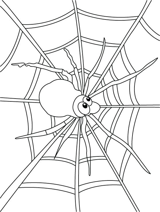 558x740 Spider Coloring Page Free Pages Of Web Col Murs
