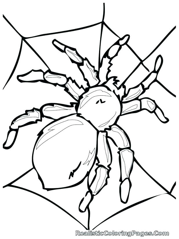 618x824 Spider Coloring Page Spider Coloring Page Free Pages Of Web Col