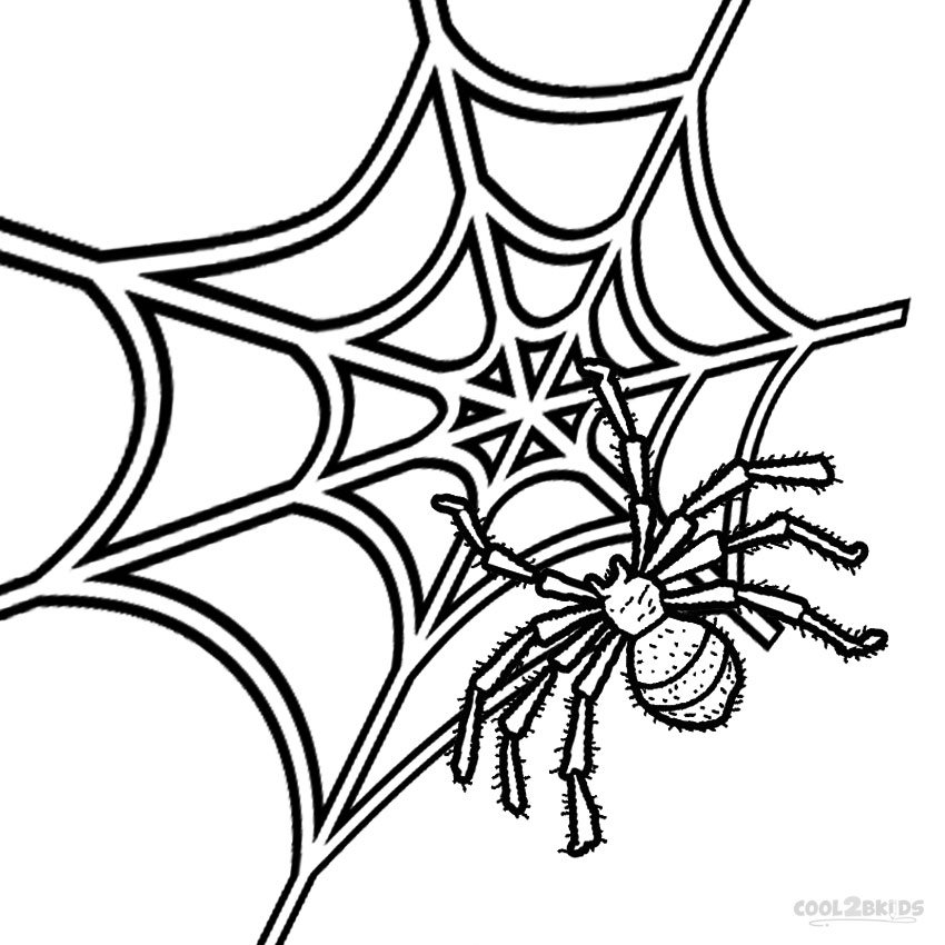 850x850 Spider Web Coloring Page Free Printable To Humorous Draw Pages