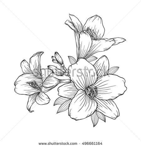 450x470 Beautiful Monochrome Black And White Bouquet Lily Isolated