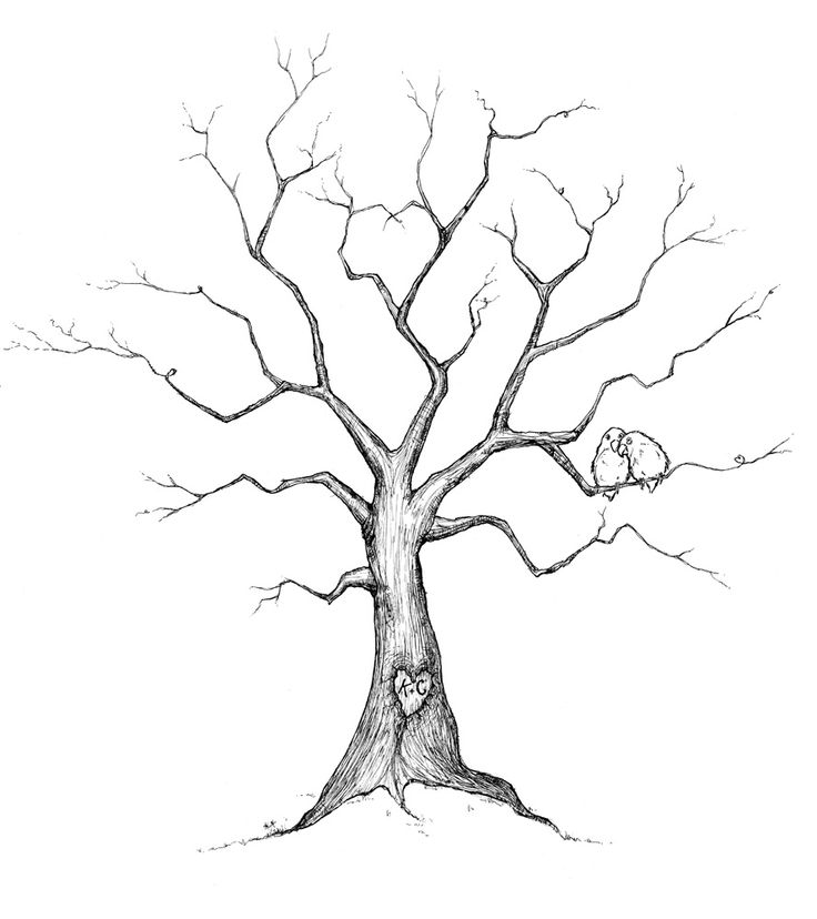 736x828 Family Tree Drawing Ideas Trees Drawings