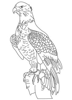 236x330 Wedge Tailed Eagle Colouring Pages Welding Wedge