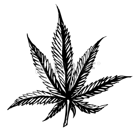 450x450 Ribbon Weed Stock Photos Amp Pictures. Royalty Free Ribbon Weed