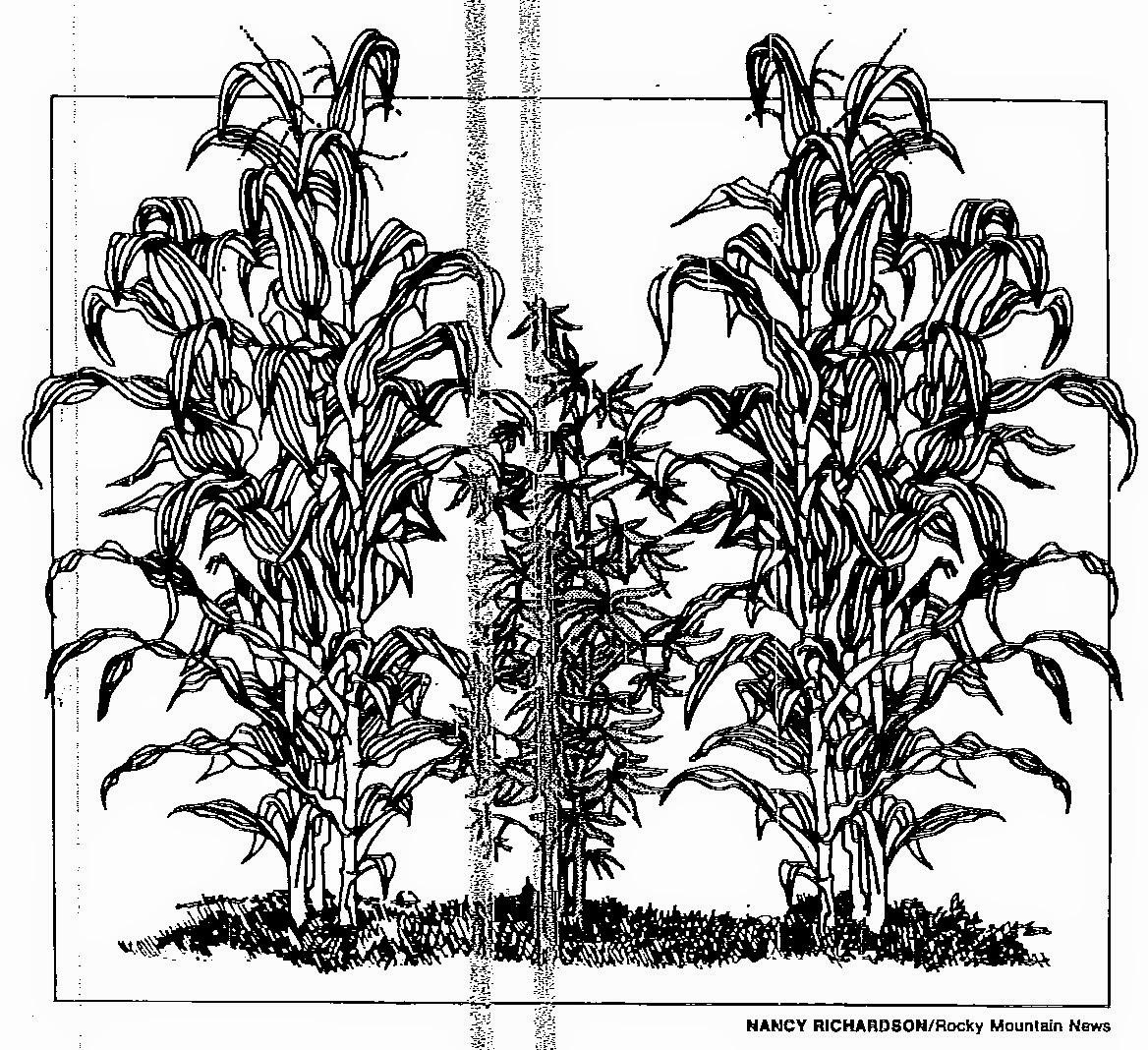 1168x1068 Drawn Pot Plant Weed Line