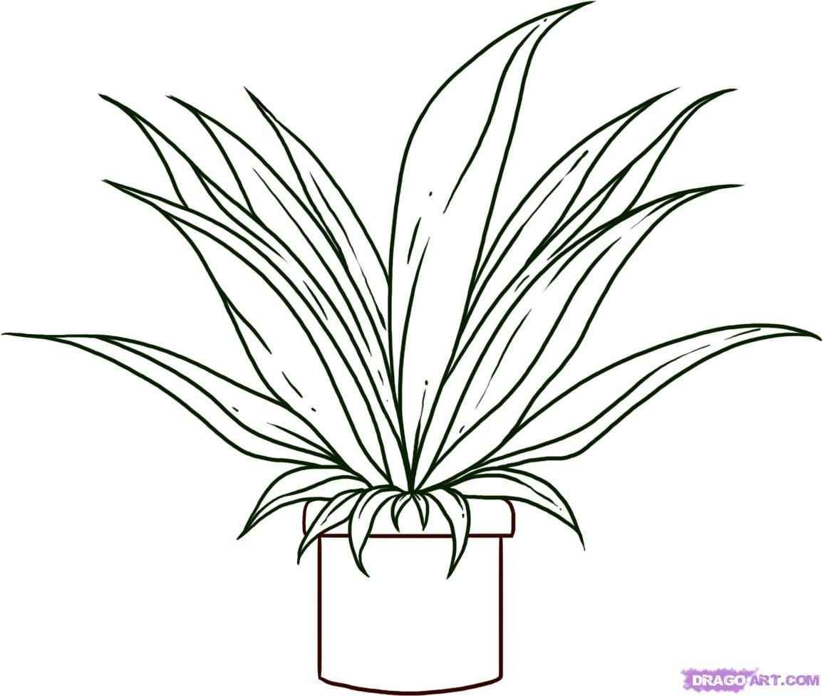 1155x977 Easy Drawings To Draw Plants, Pot Plant Drawing