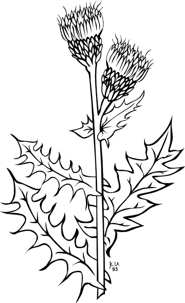 366x598 Weed Plant Clip Art