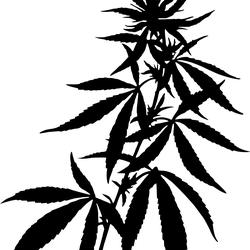 250x250 Colorado Medical Marijuana Dispensaries Amp Recreational Marijuana
