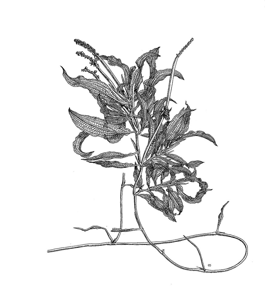 874x1000 How To Draw Pond Weed, Pond Weeds Coloring Pages