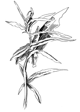 272x380 Paddle8 Resilient Weeds