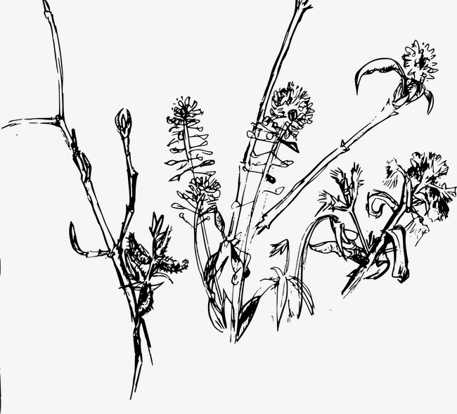 650x589 Wild Weed, Weed, Wild Png Image For Free Download