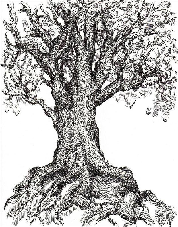 Ordinaire 620x789 Tree Drawings
