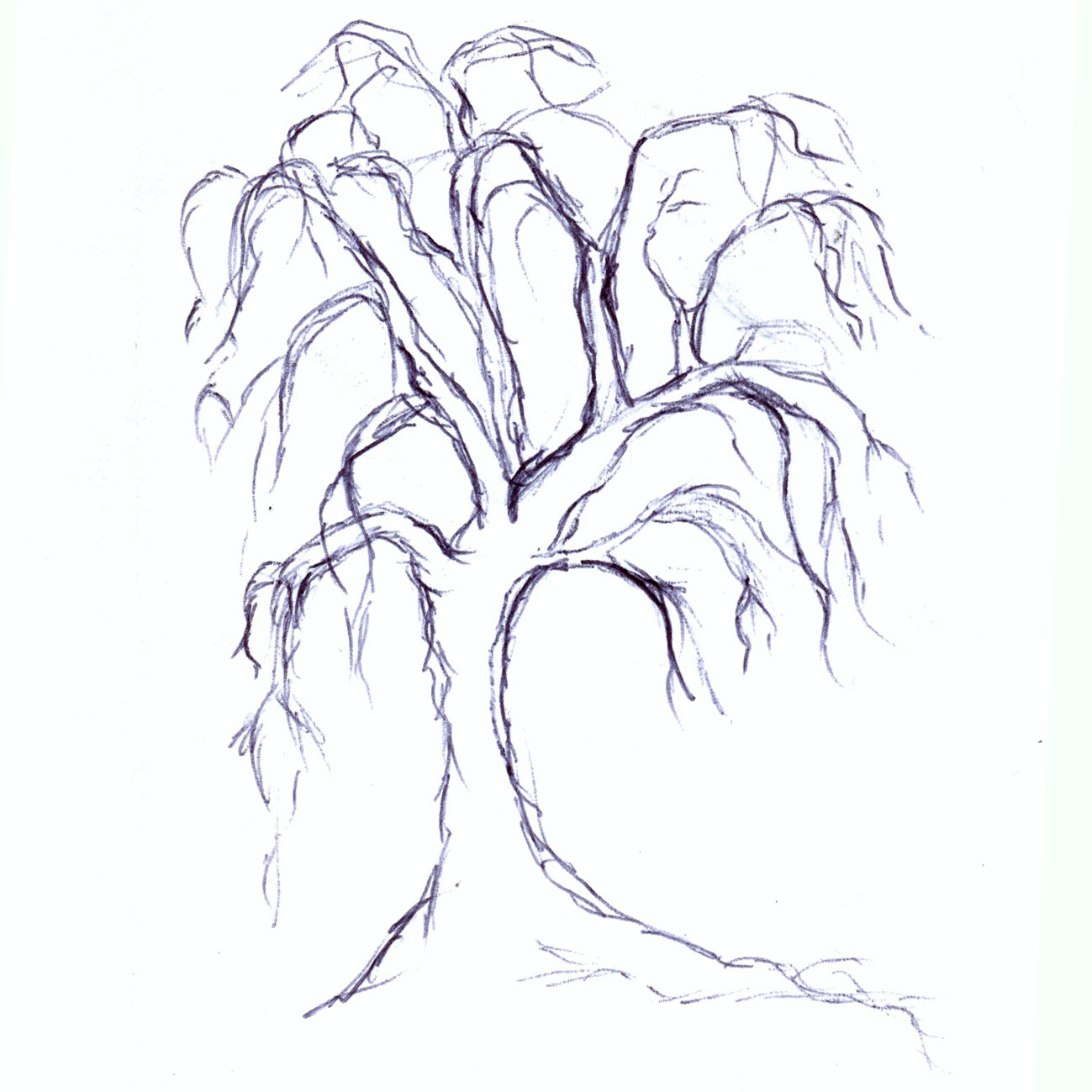 Weeping Willow Tree Drawing At Getdrawings Com Free For Personal