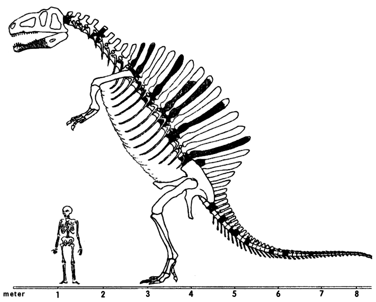 747x600 Spinosaurus Scale Picture