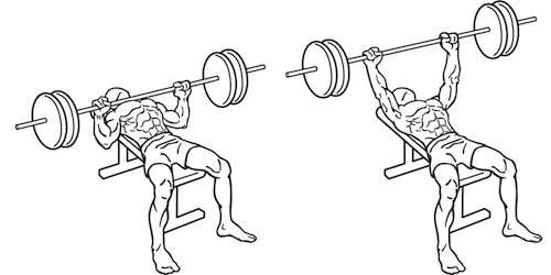 500x250 The Only Weight Training Supplements You Need Crasstalk