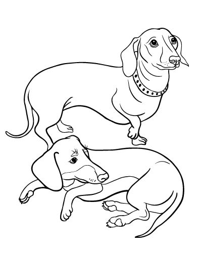 392x507 Dachshund Coloring Pages 16 Best Dachshund Coloring Pages Images