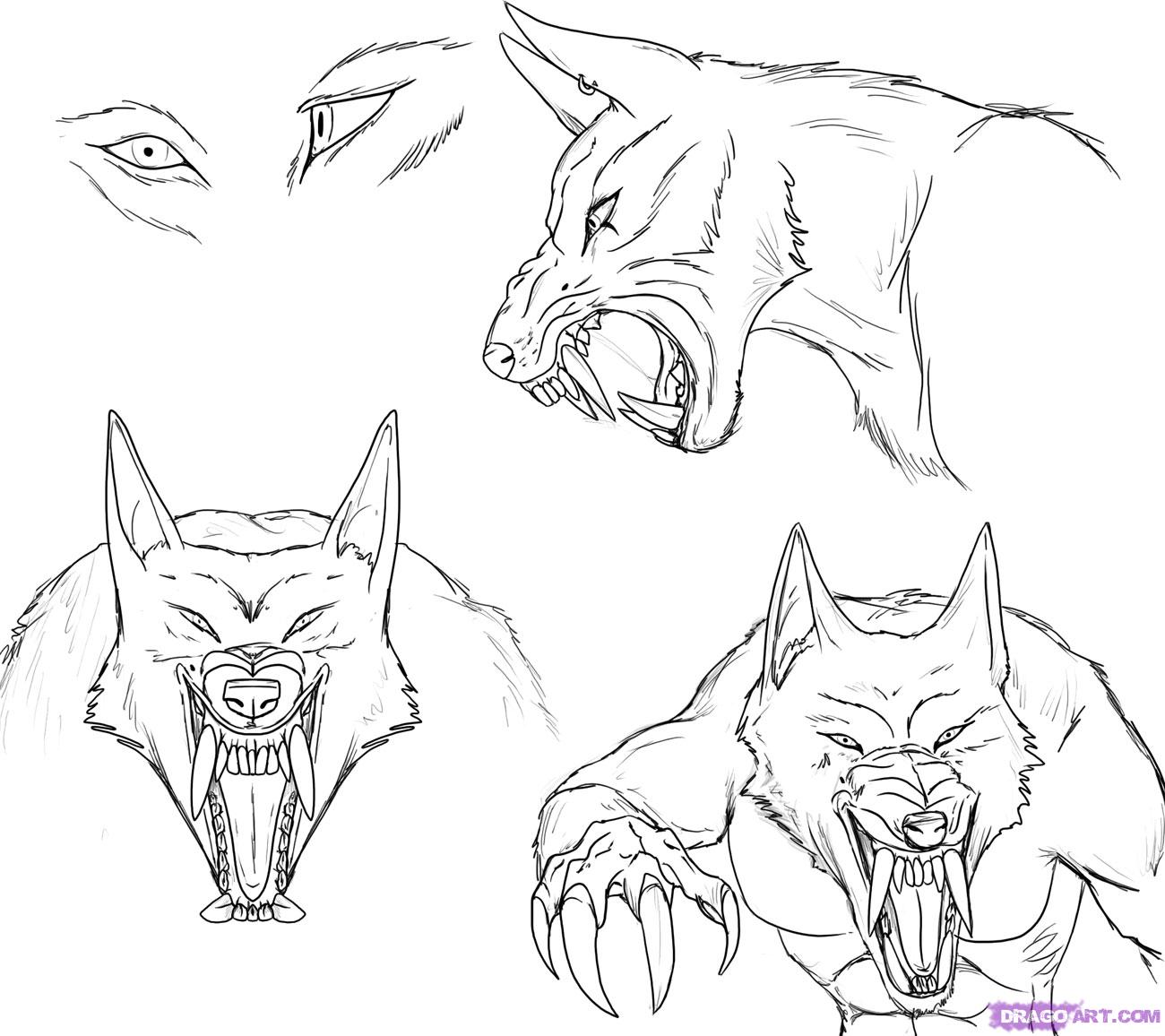 Werewolf Drawing Tutorial At Getdrawingscom Free For Personal Use
