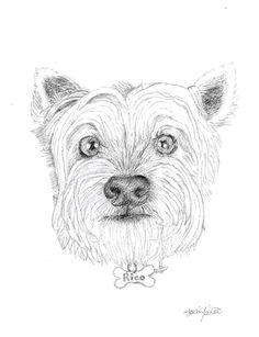 236x307 Tommy The Cavoodle, Drawing Commissions Drawings