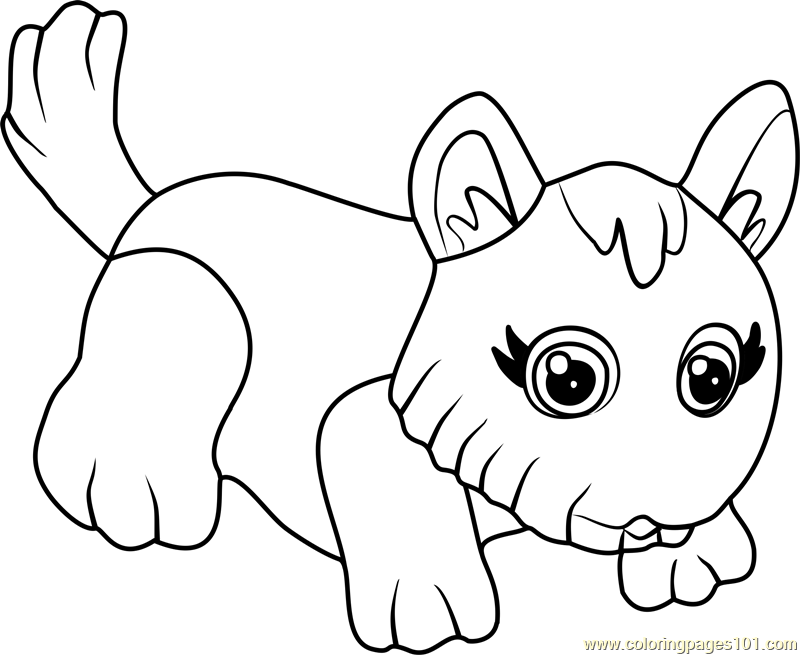 800x655 West Highland Terrier Coloring Page