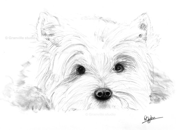 570x418 West Highland Terrier Dog Limited Edition Signed Art Print Https