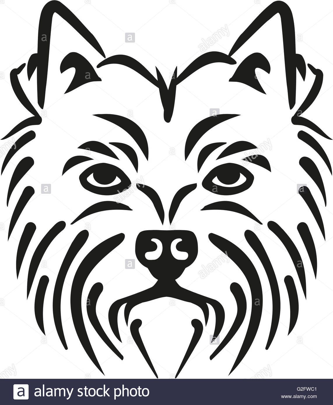 1142x1390 West Highland Terrier Head Stock Photo, Royalty Free Image