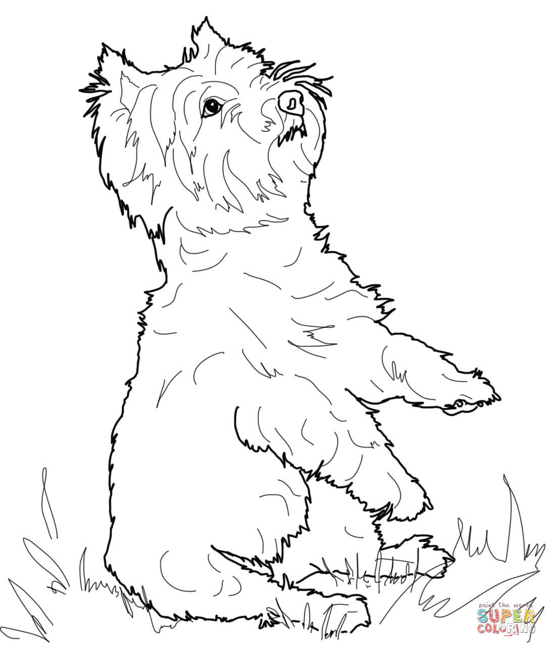 1083x1279 West Highland White Terrier Coloring Page Free Printable
