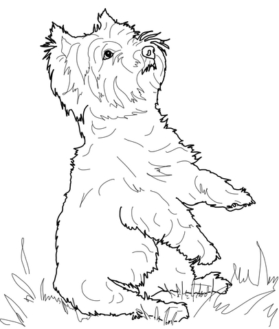 406x480 West Highland White Terrier Coloring Page Free Printable