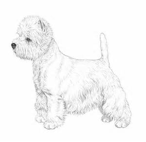 300x291 Corso Coloring Page Along With West Highland Terrier Coloring